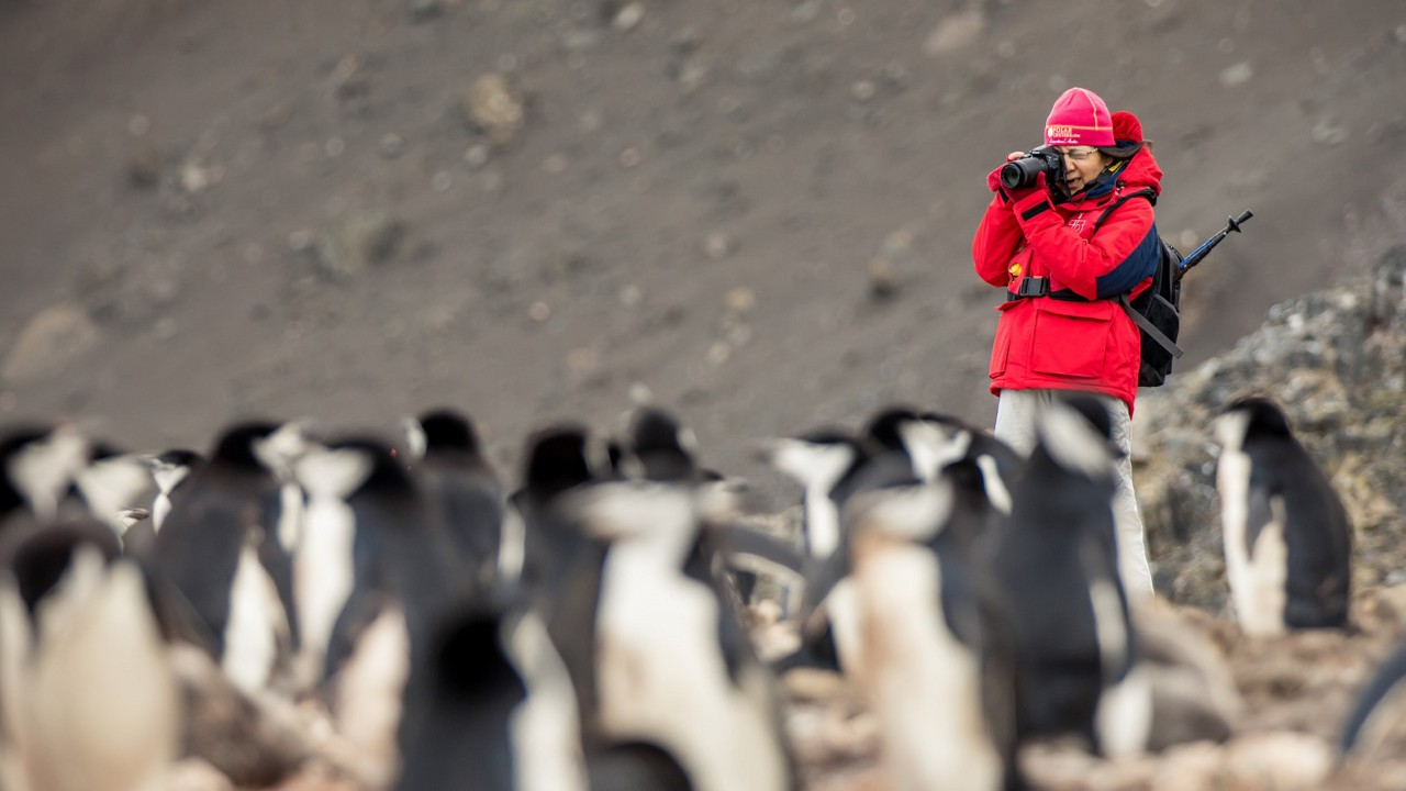 Girl photographing penguin